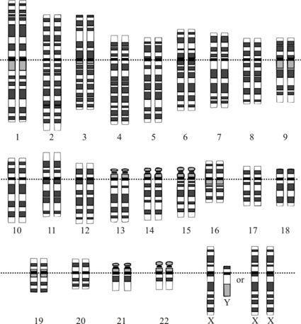 Representación gráfica del cariotipo humano normal.
